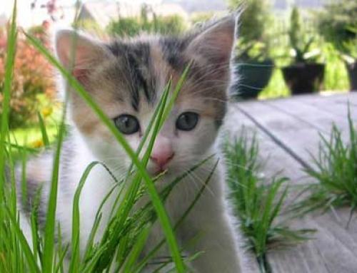 El cuento del gato que perseguía su cola